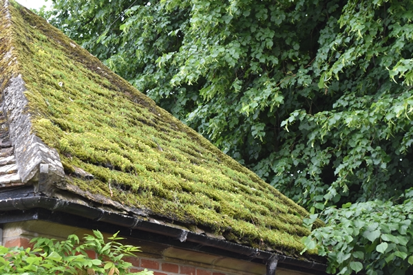 m_Roofs (3).jpg