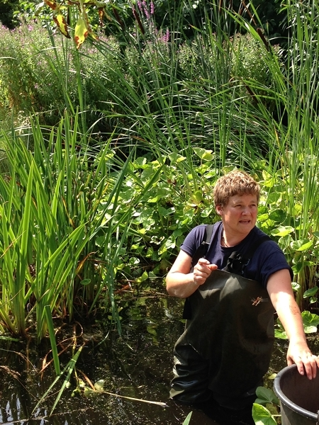 It was pond cleaning day and this lady was up to her waist in rubber waders.