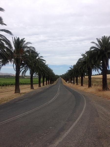 Seppeltsfield Road aka Avenue of Hopes & Dreams