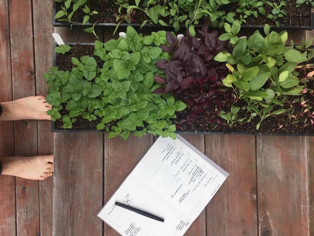Journal — FLOWER SCOUT