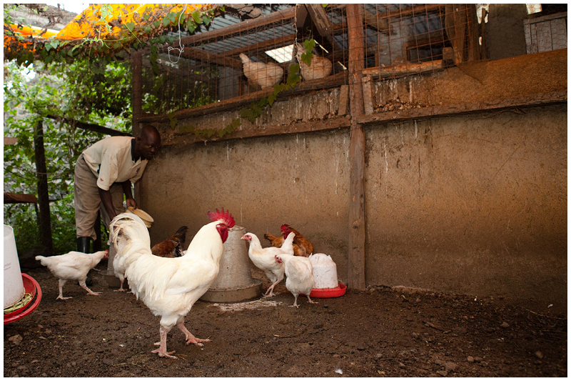 The chickens provide eggs every day.