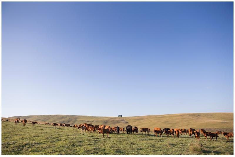 Morgan farm family shoot_Eastern Cape_014.jpg