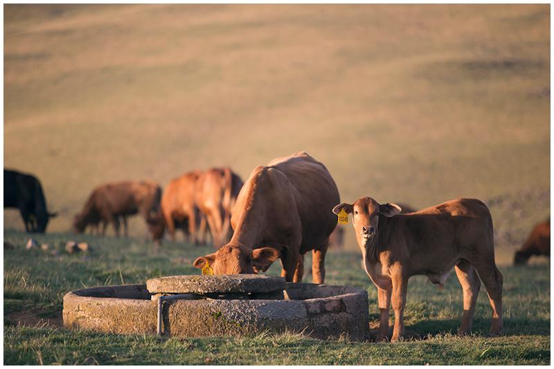 Morgan farm family shoot_Eastern Cape_032.jpg