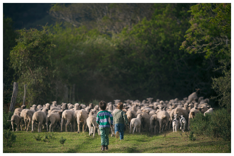 Painter_Eastern Cape_Family farm photoshoot_56.jpg