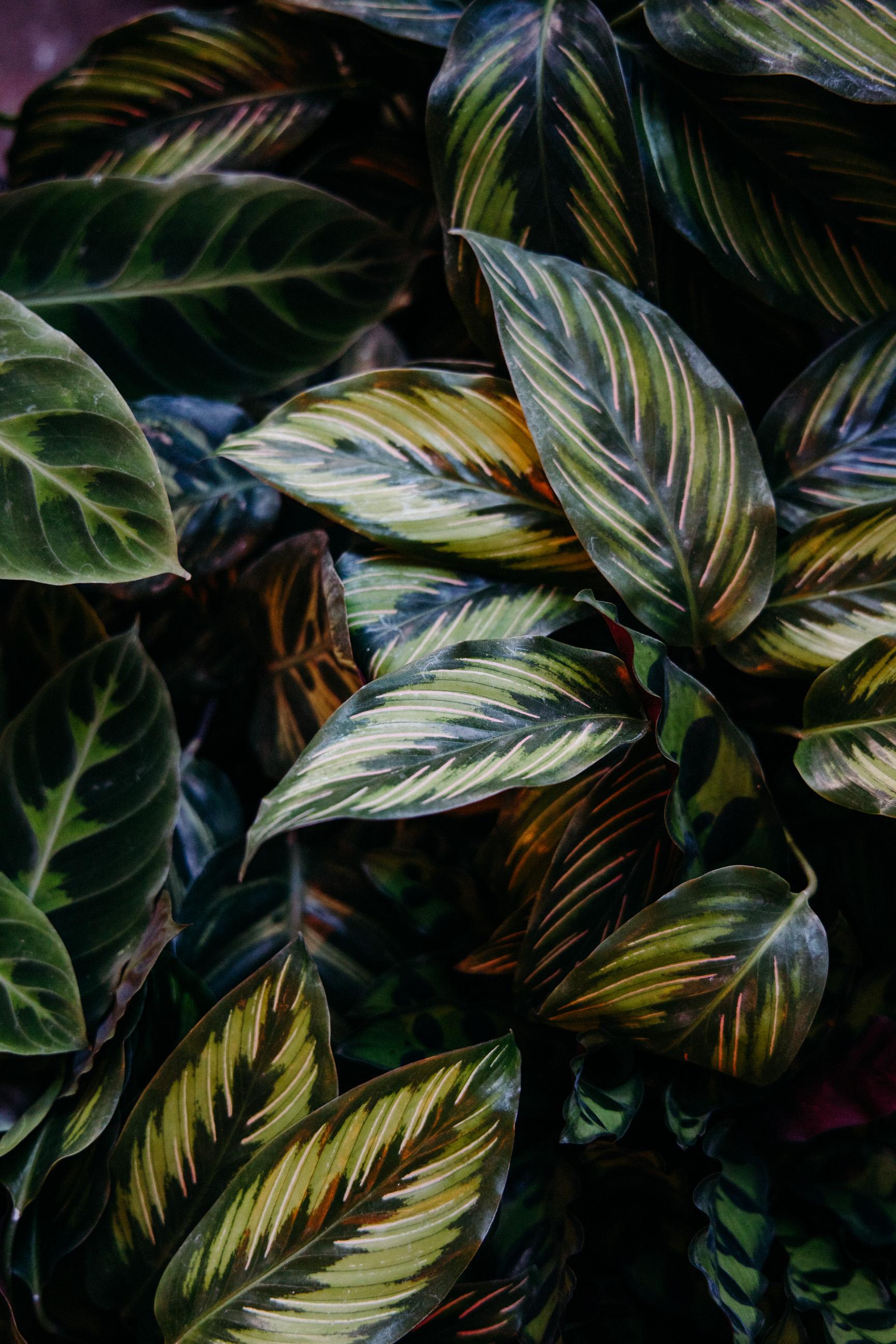stem-hes+flora-4001-1.jpg