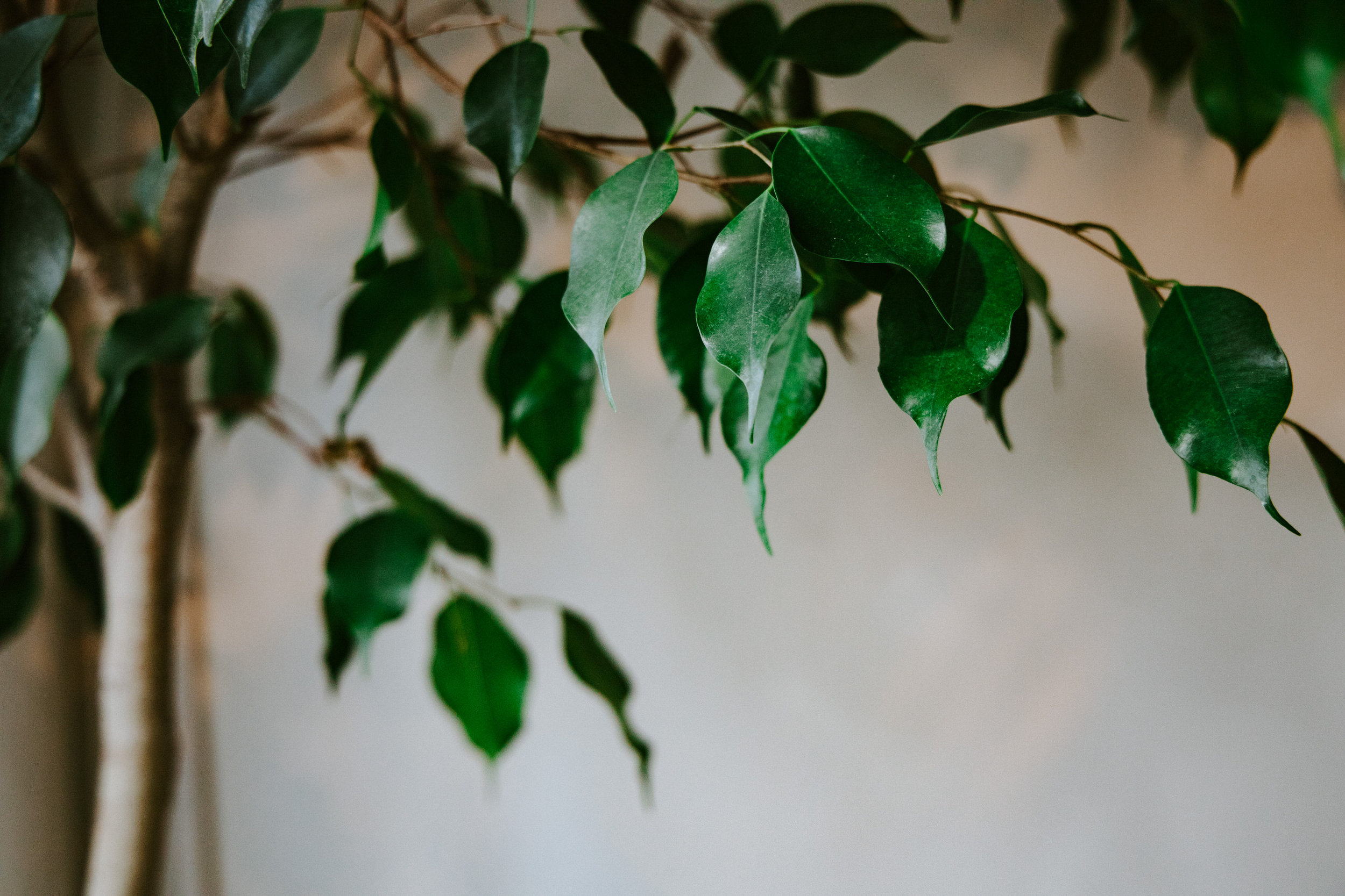 stem-hes+flora-4312.jpg