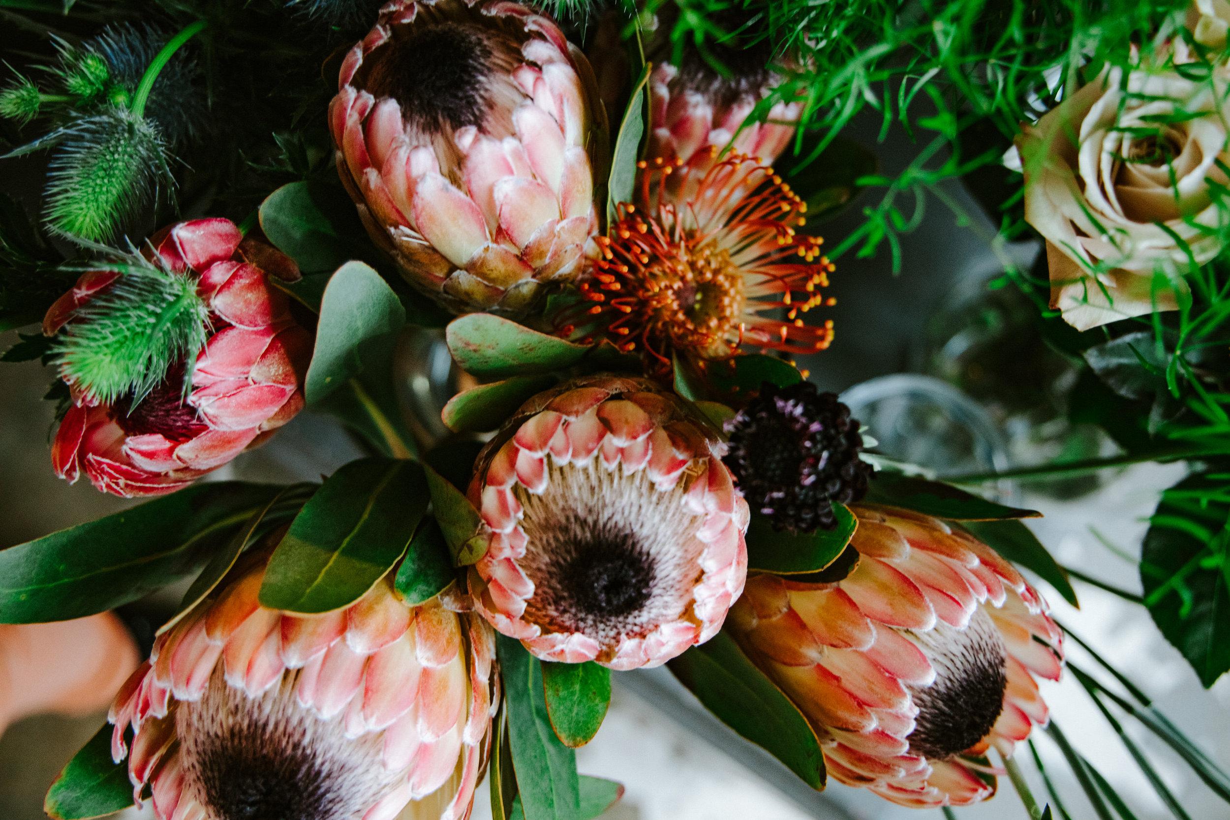stem-hes+flora-4308.jpg