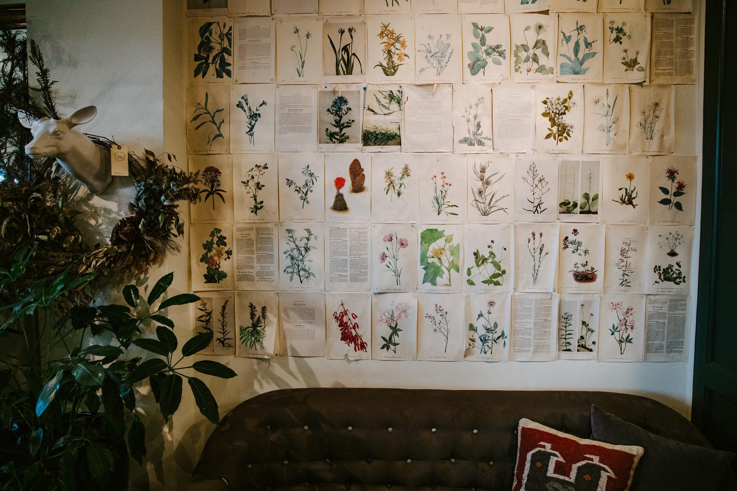 stem-hes+flora-4305.jpg