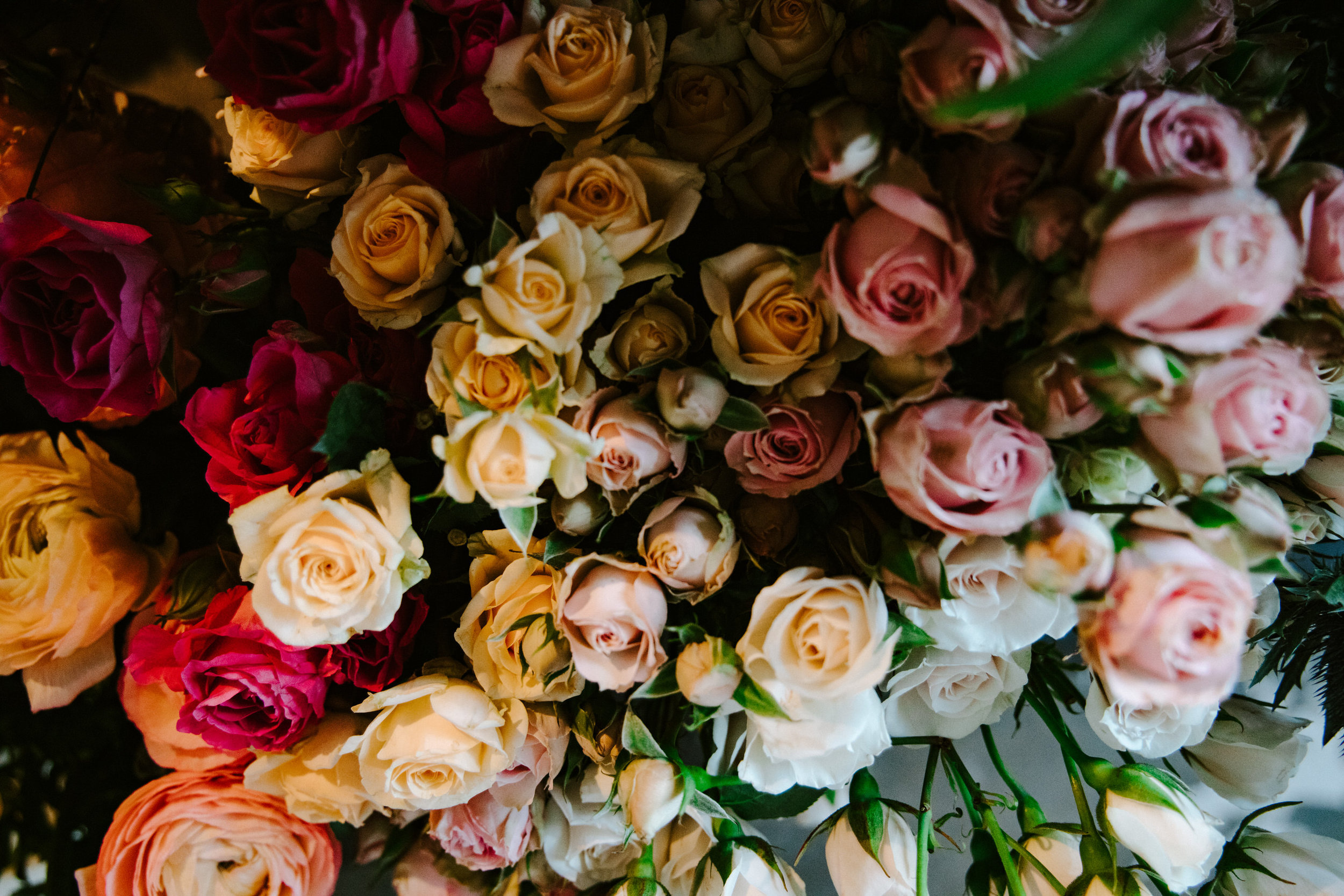 stem-hes+flora-4307.jpg