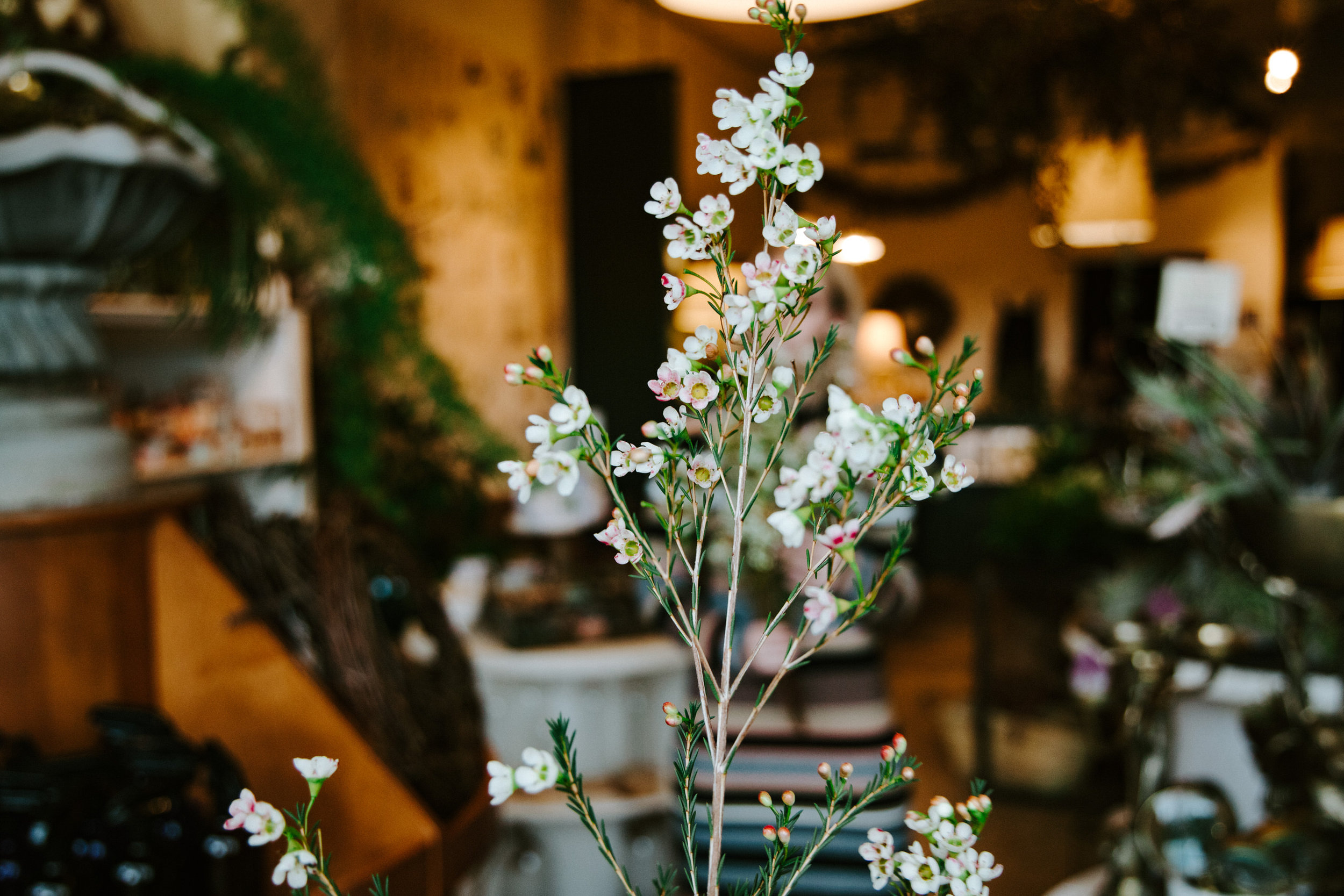 stem-hes+flora-4283.jpg