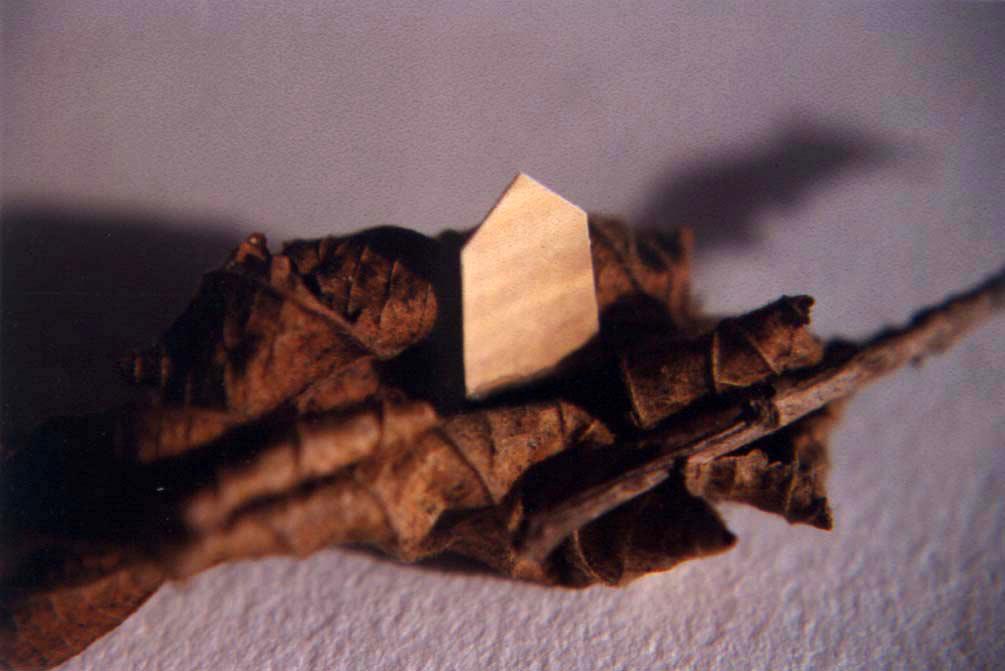 leaf_home.jpg