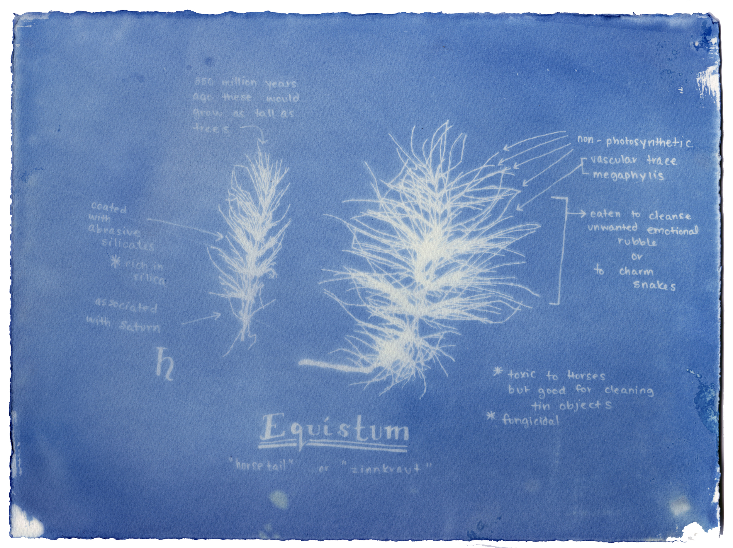 Rachel M Thornton  Camp Cyanotype at the Sackville Waterfowl Park  July 2016