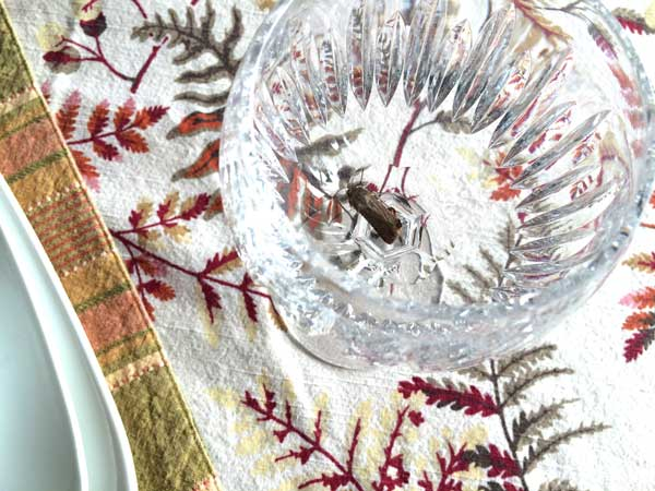 Be sure to clean up your dish ware that has been stored.