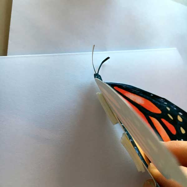 butterfly2-8.jpg
