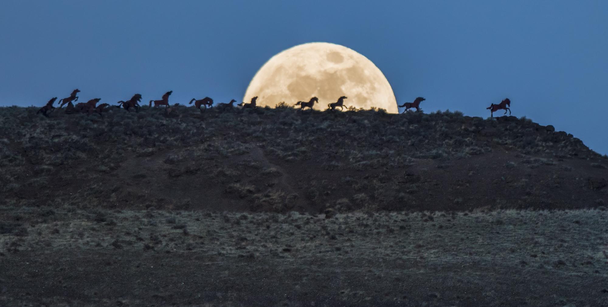 wild horses-1-9.jpg