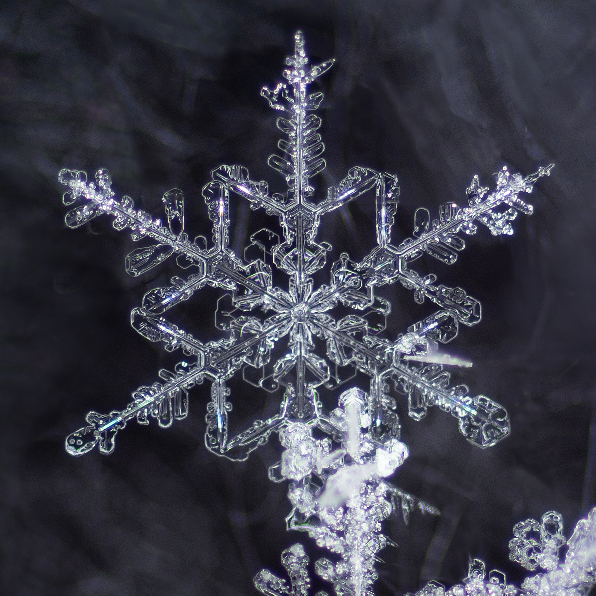 snowflake photography sample 1-3.jpg