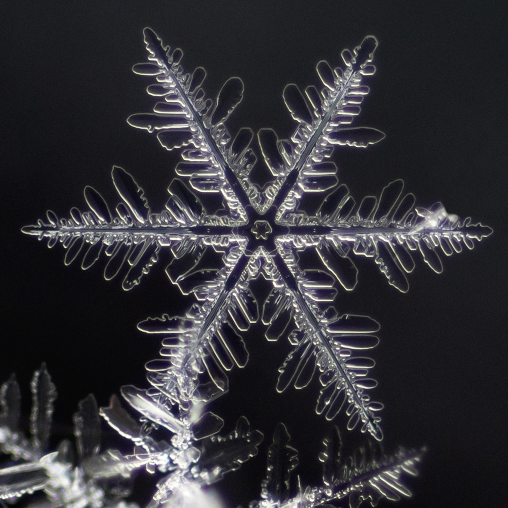 snowflake photography sample-5.jpg