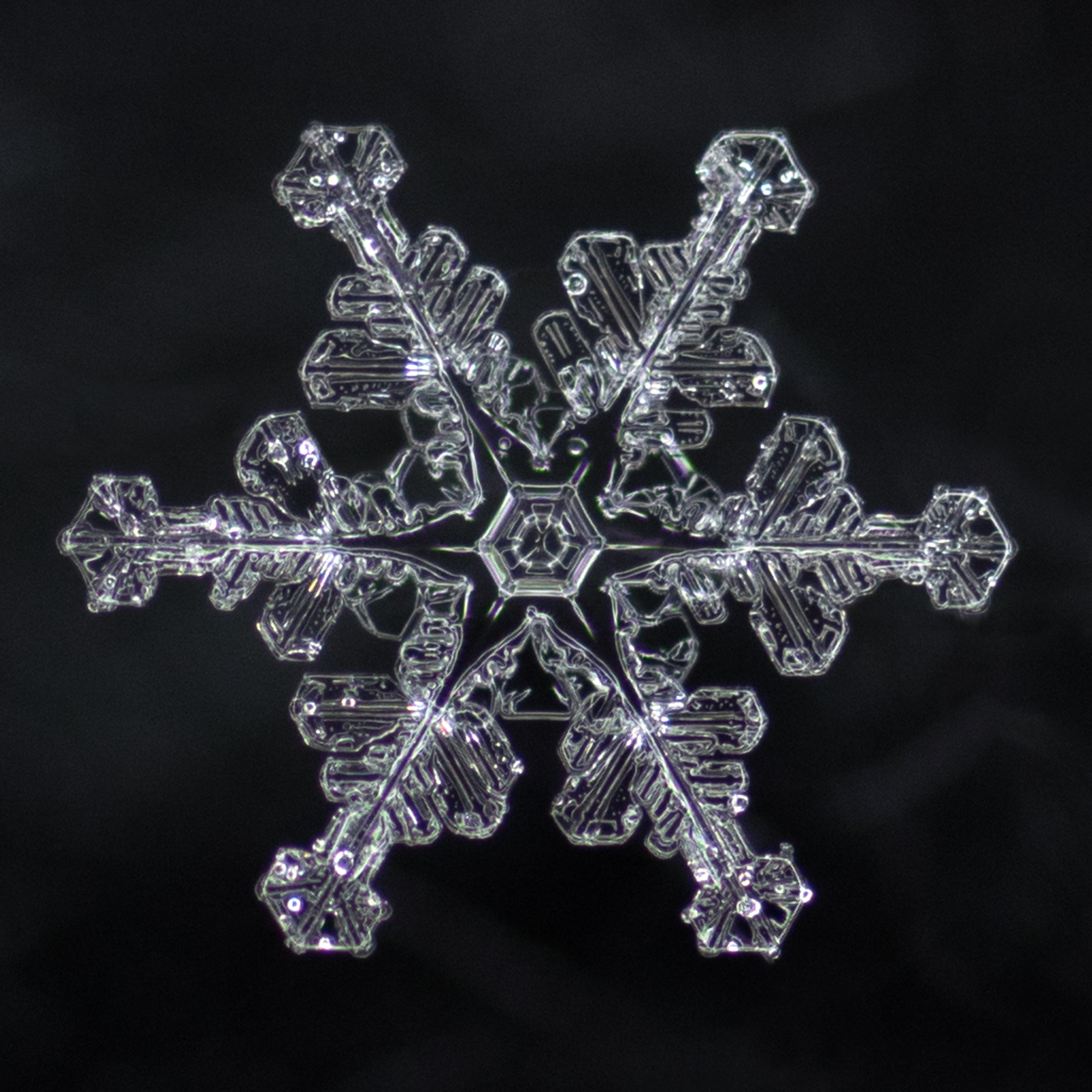 snowflake photography sample-6.jpg