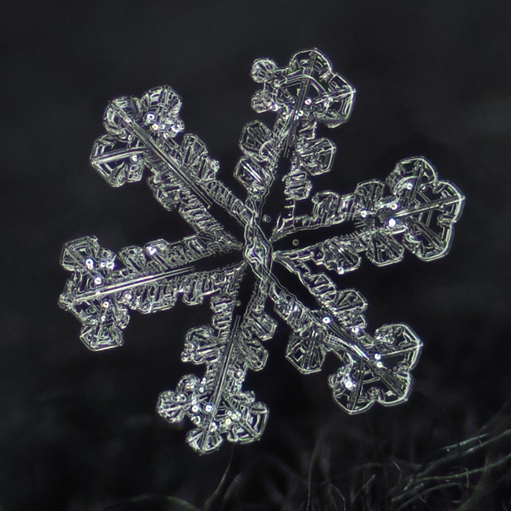 snowflake photography sample-7.jpg