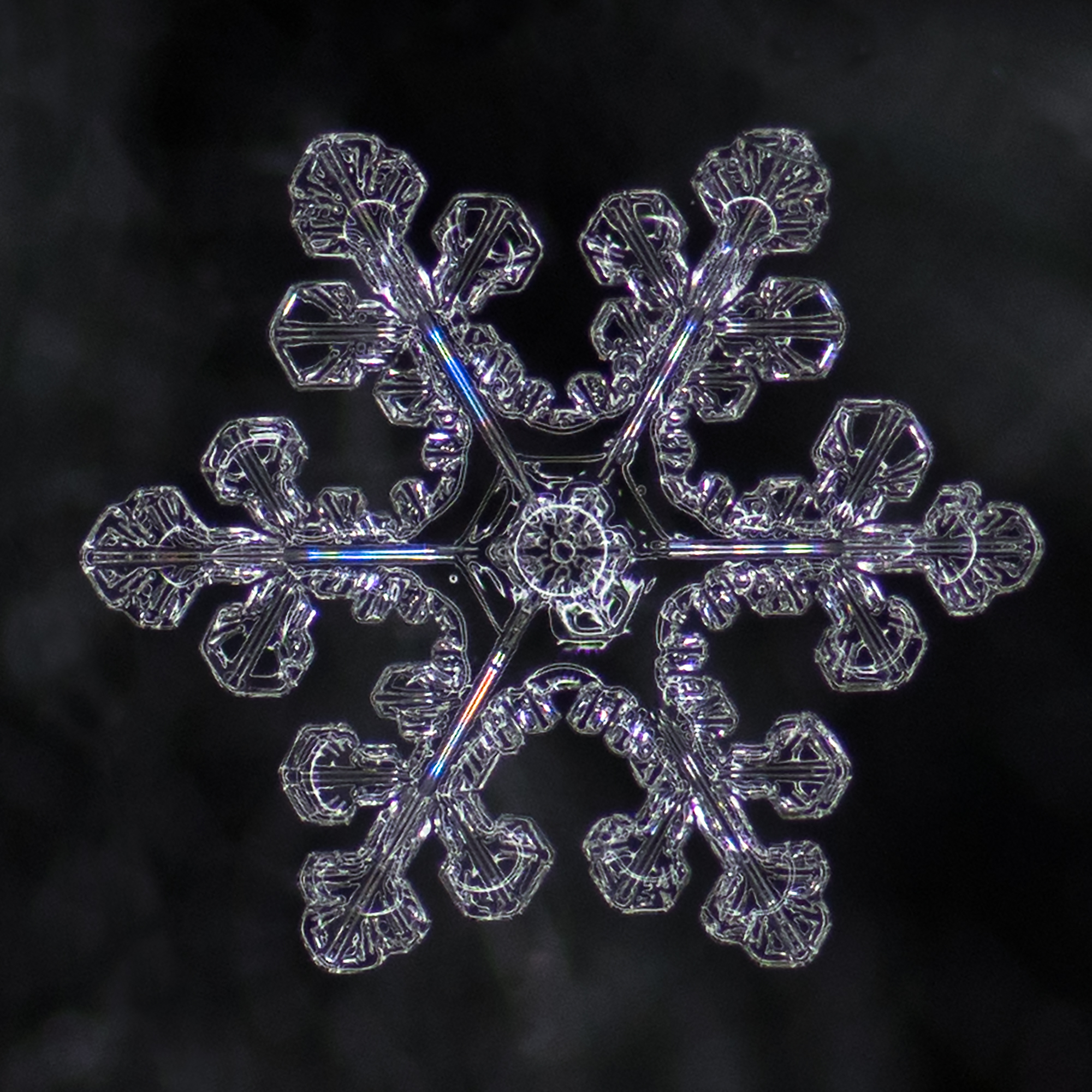 snowflake photography sample-8.jpg