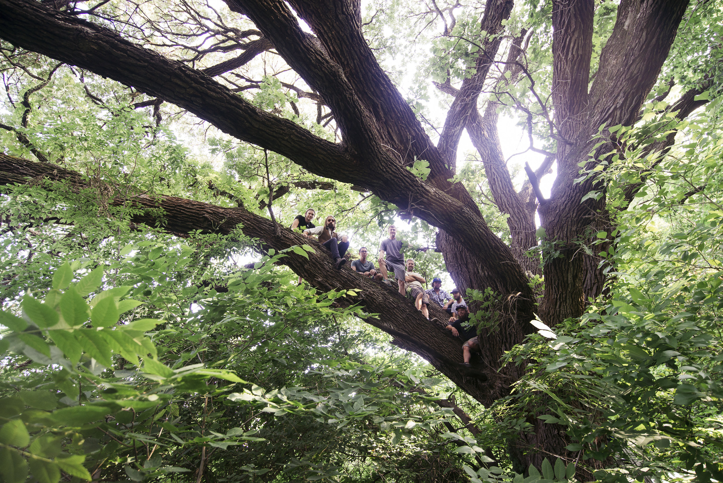 The STRUCT/RESTRUCT team in the giant bur oak behind the Burrough's Creek Addition project site. June 2017