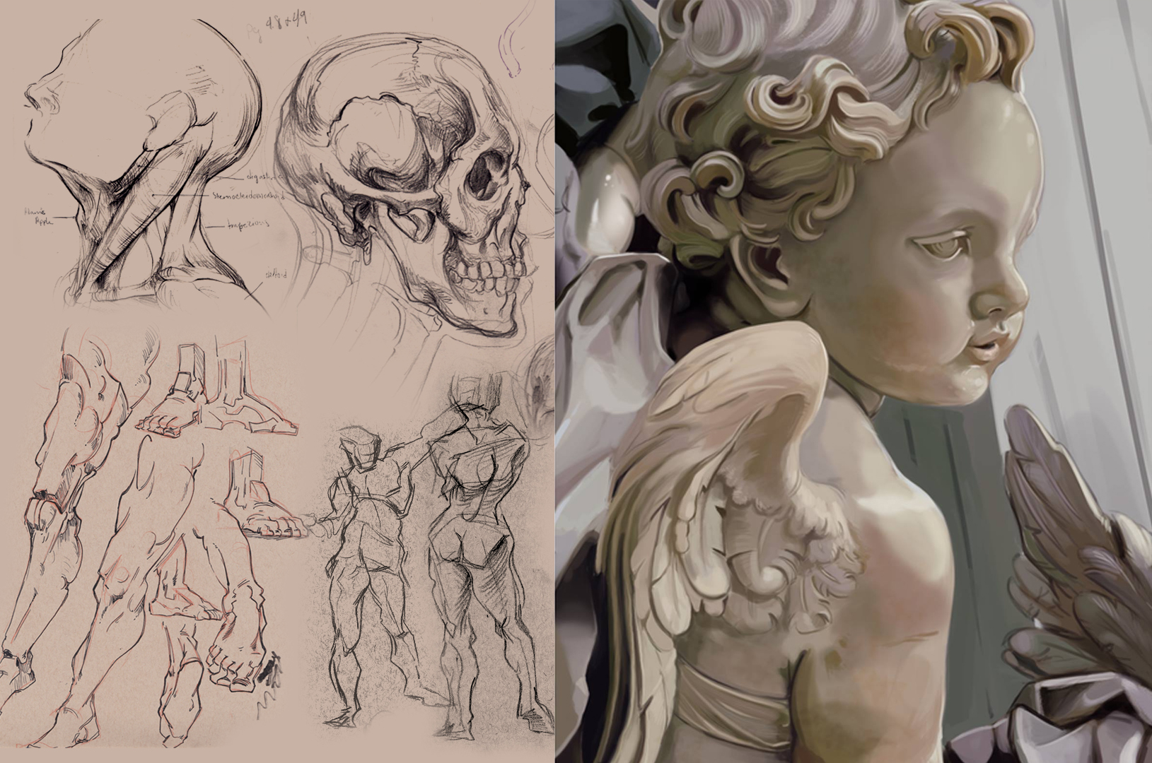 Anatomy sketches and a painted studio of a cherub photo.