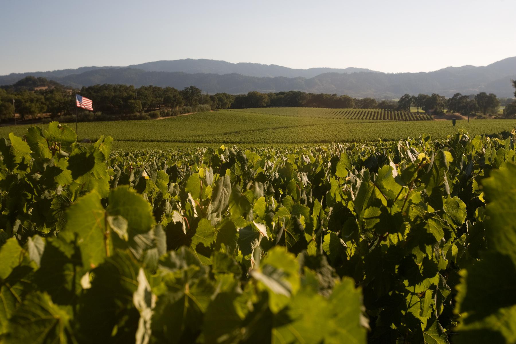 Rudd-vineyards-with-flag.jpg