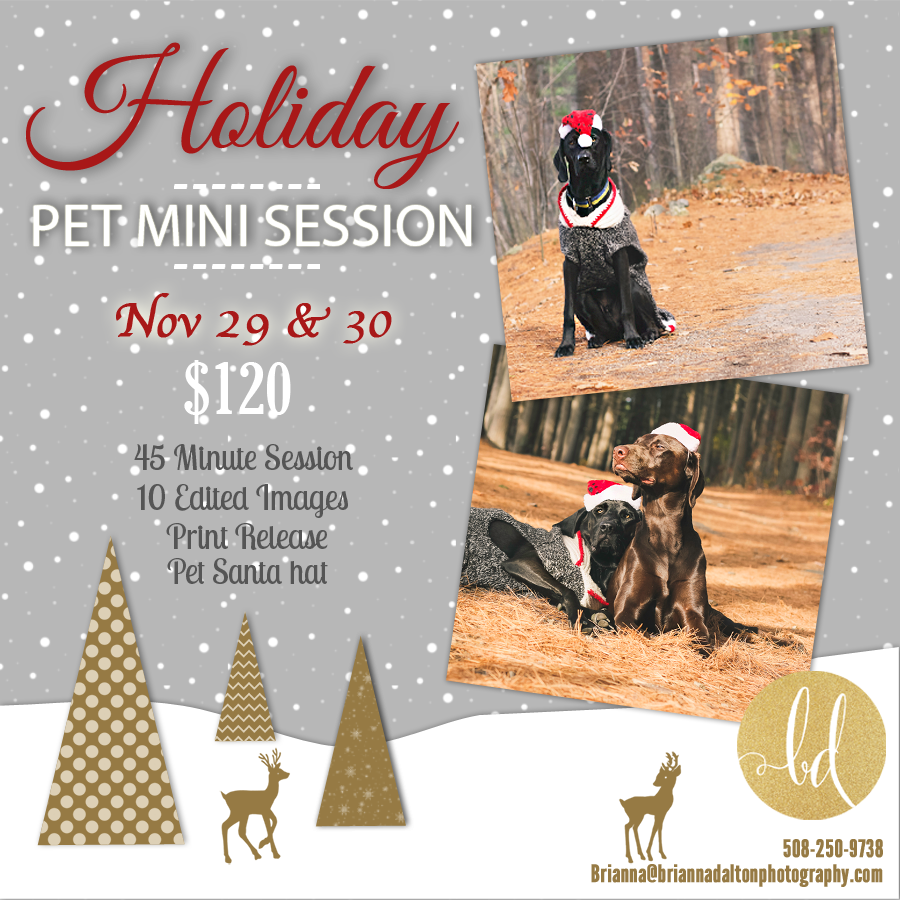 Pet Mini Sessions  November 12th - December 19th 2014
