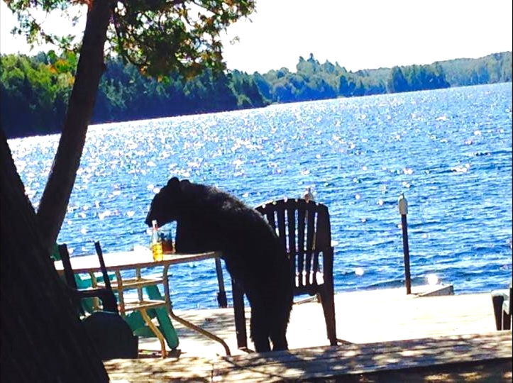 Today's the day the teddy bears have their picnic (at Paudash Lake)