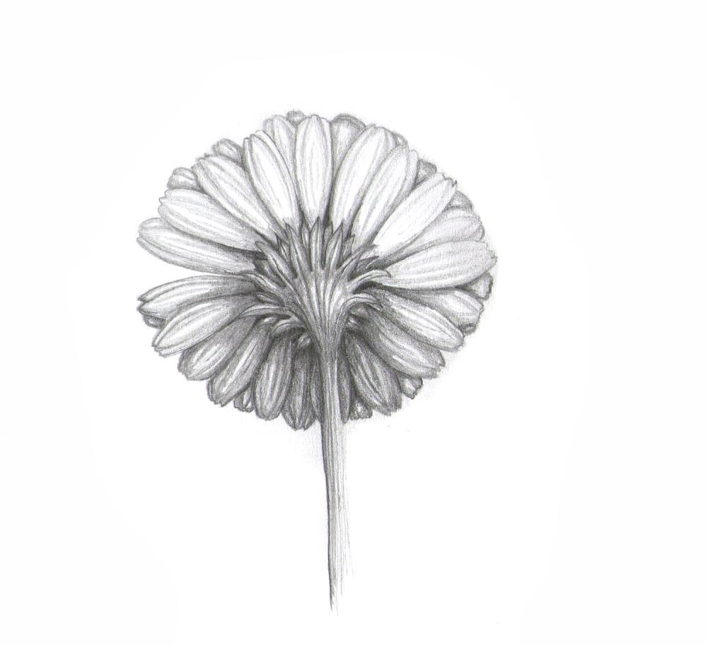 flower p117.jpg