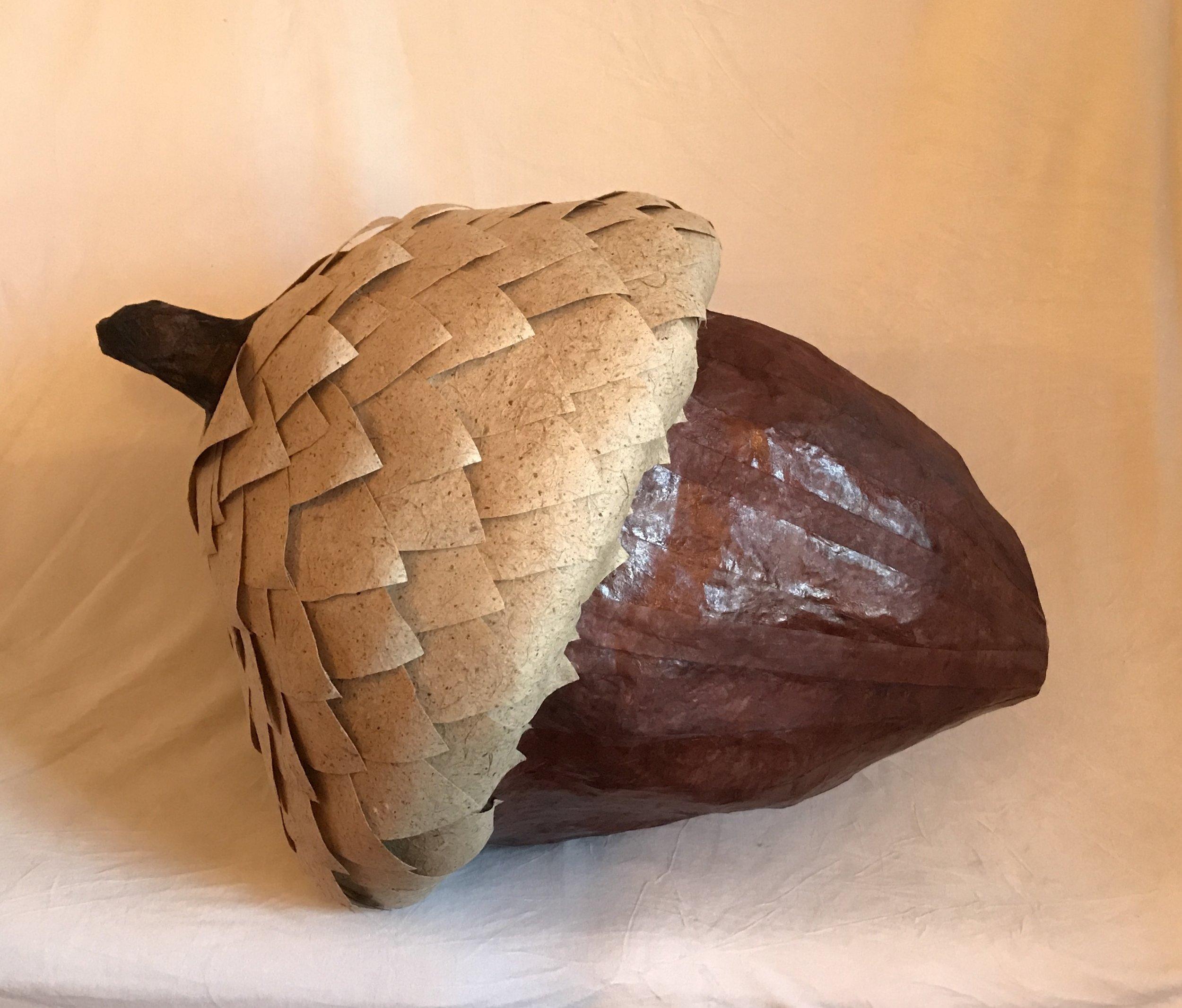 acorn close up.jpg