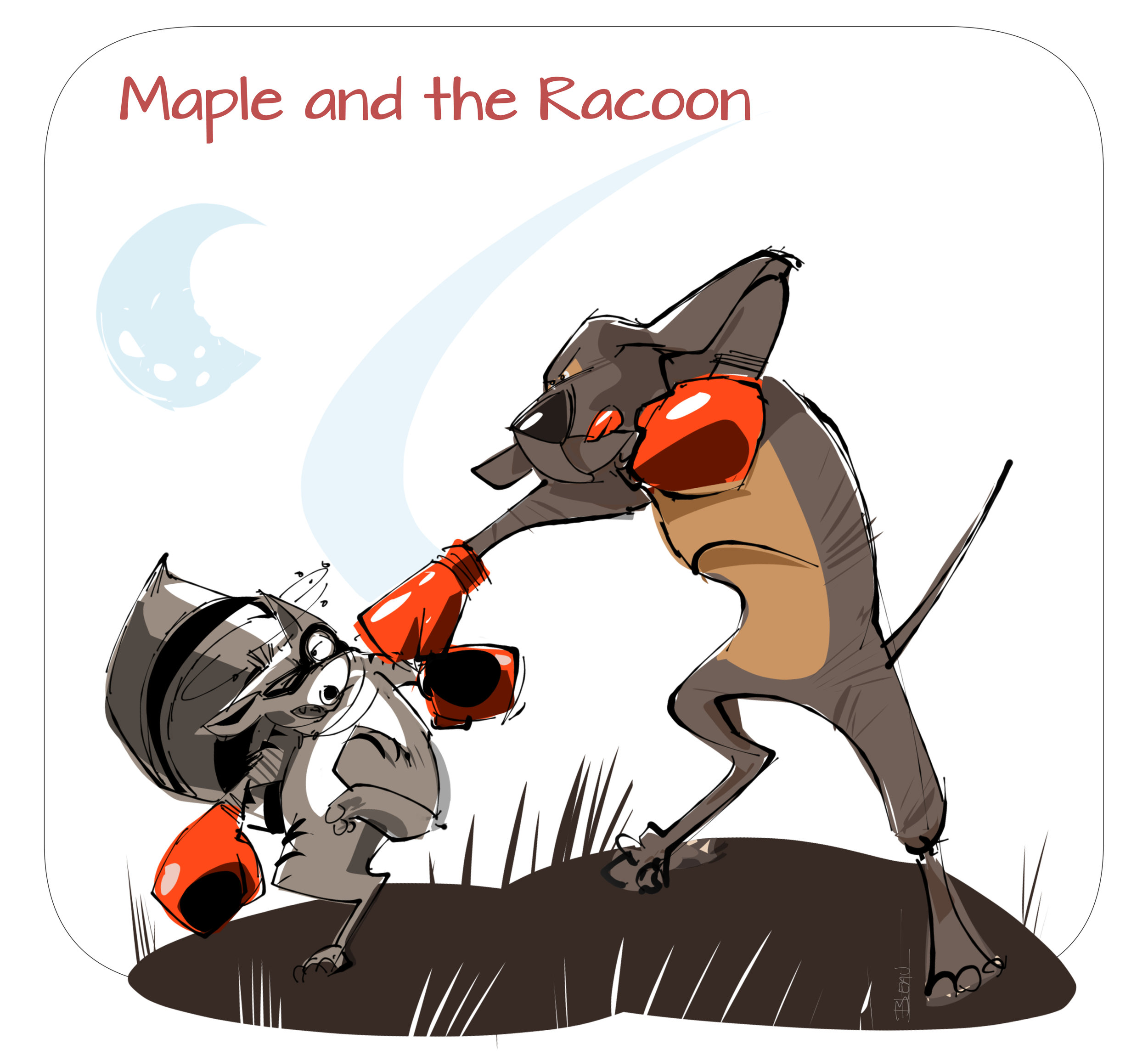 maple an dhte racoon.jpg
