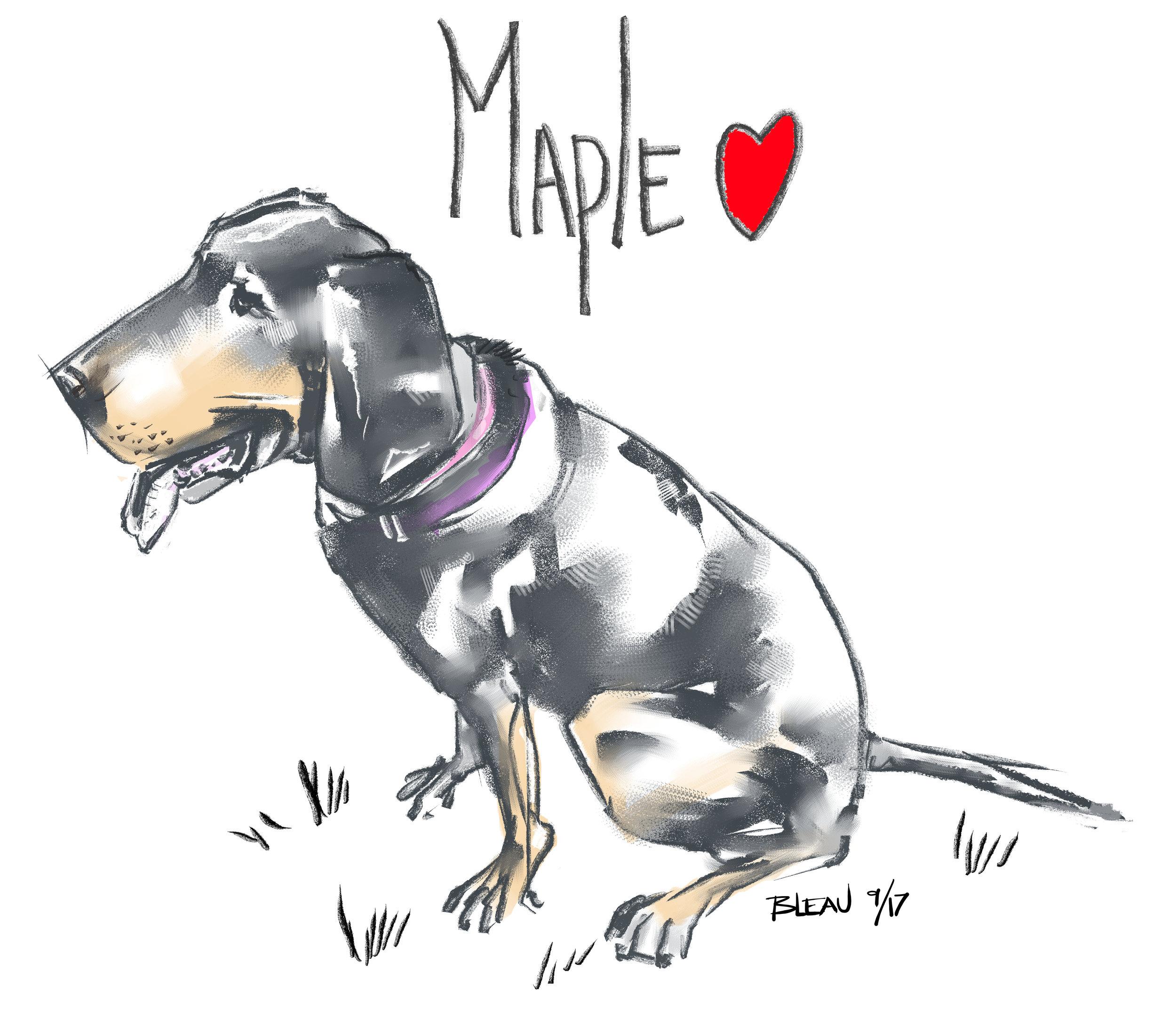 maple sketch.jpg
