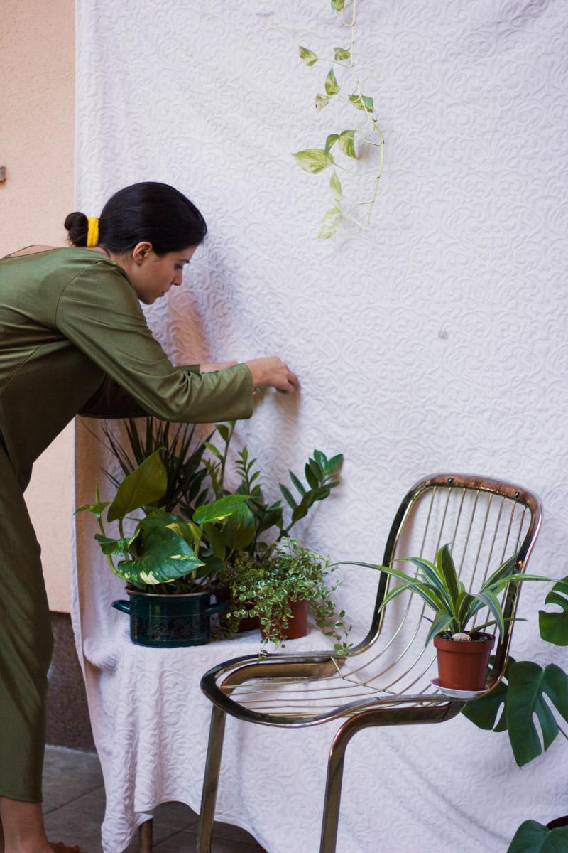 setup with plants 2
