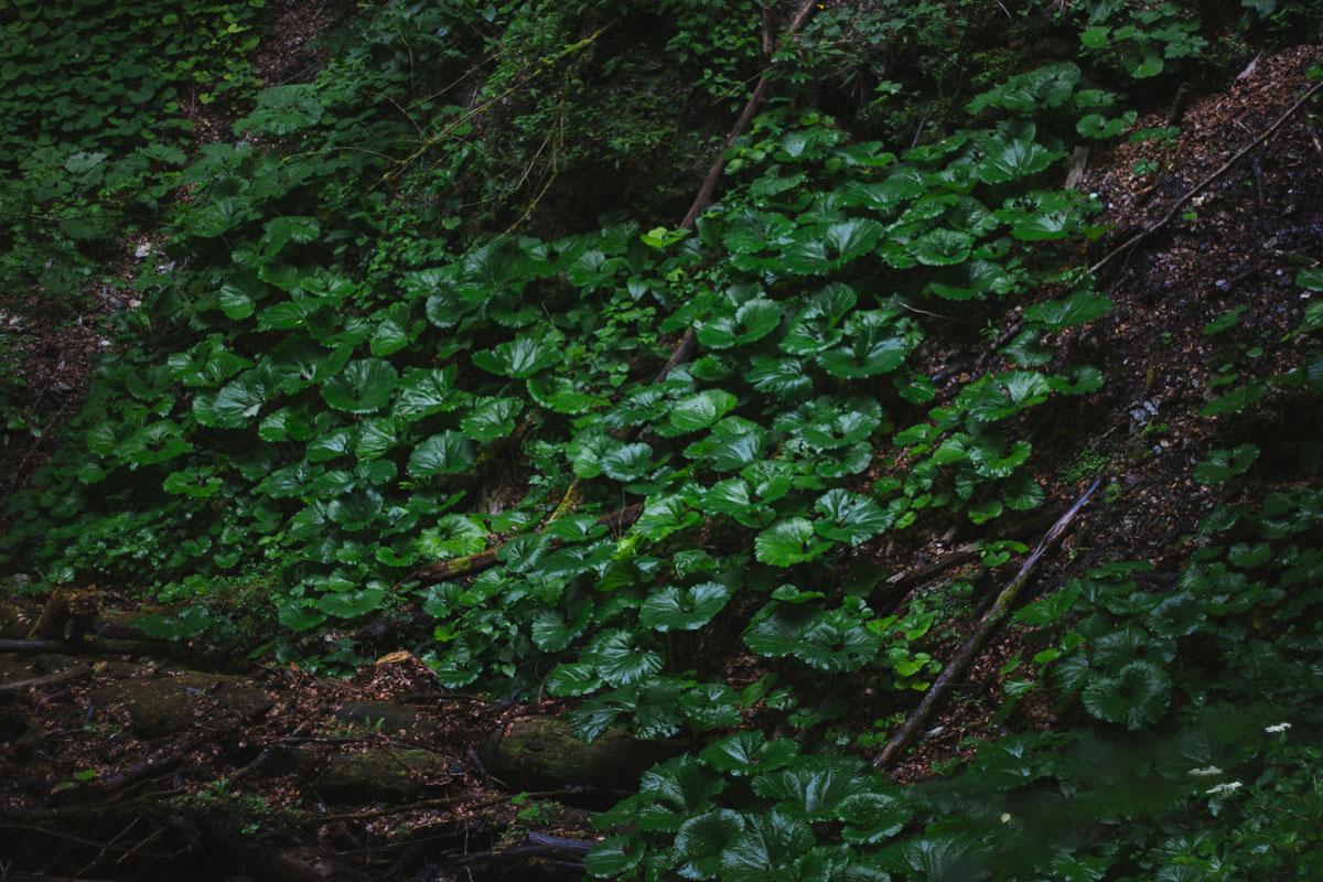 green leafy plants.jpg