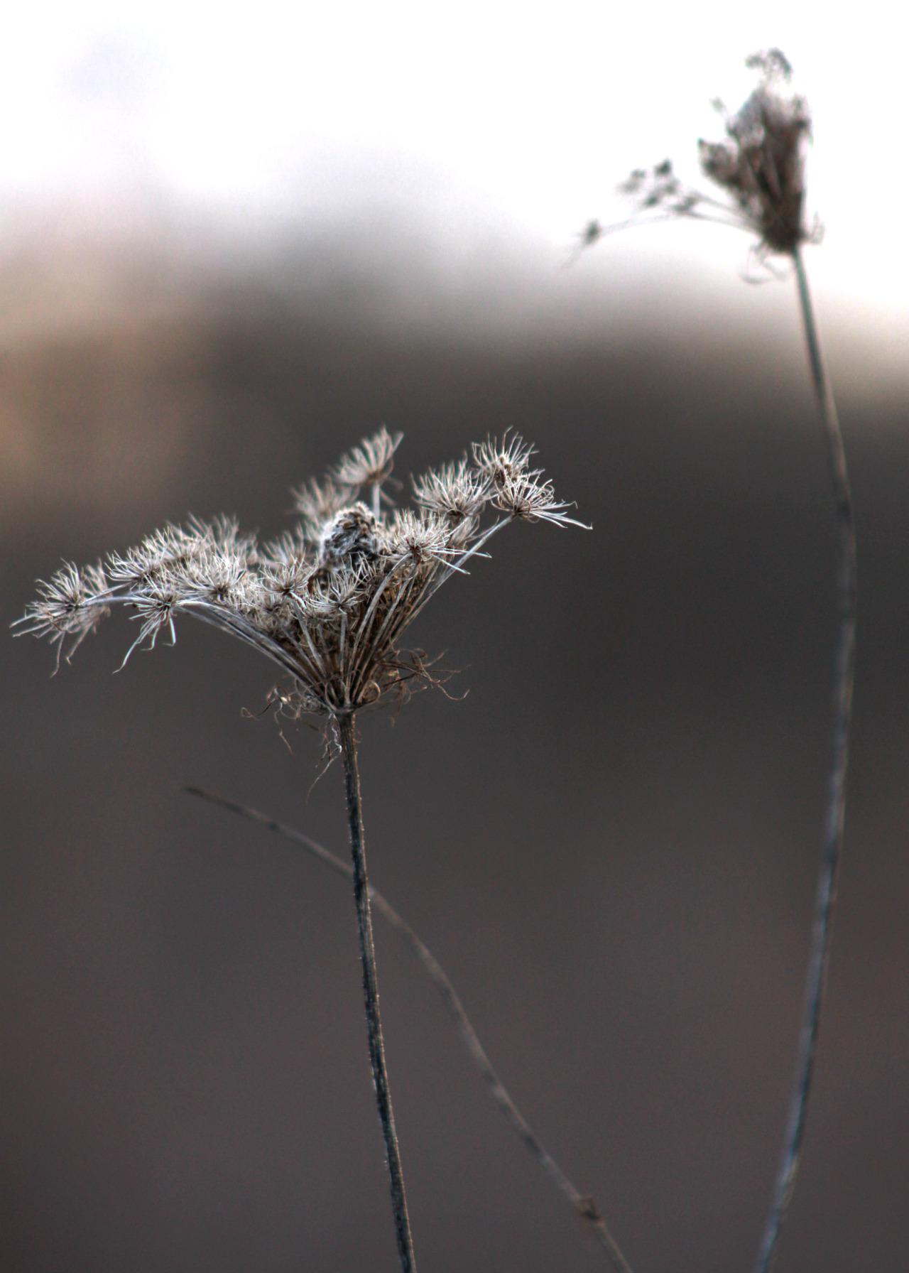 walking-geema :     ……..in the winter woods