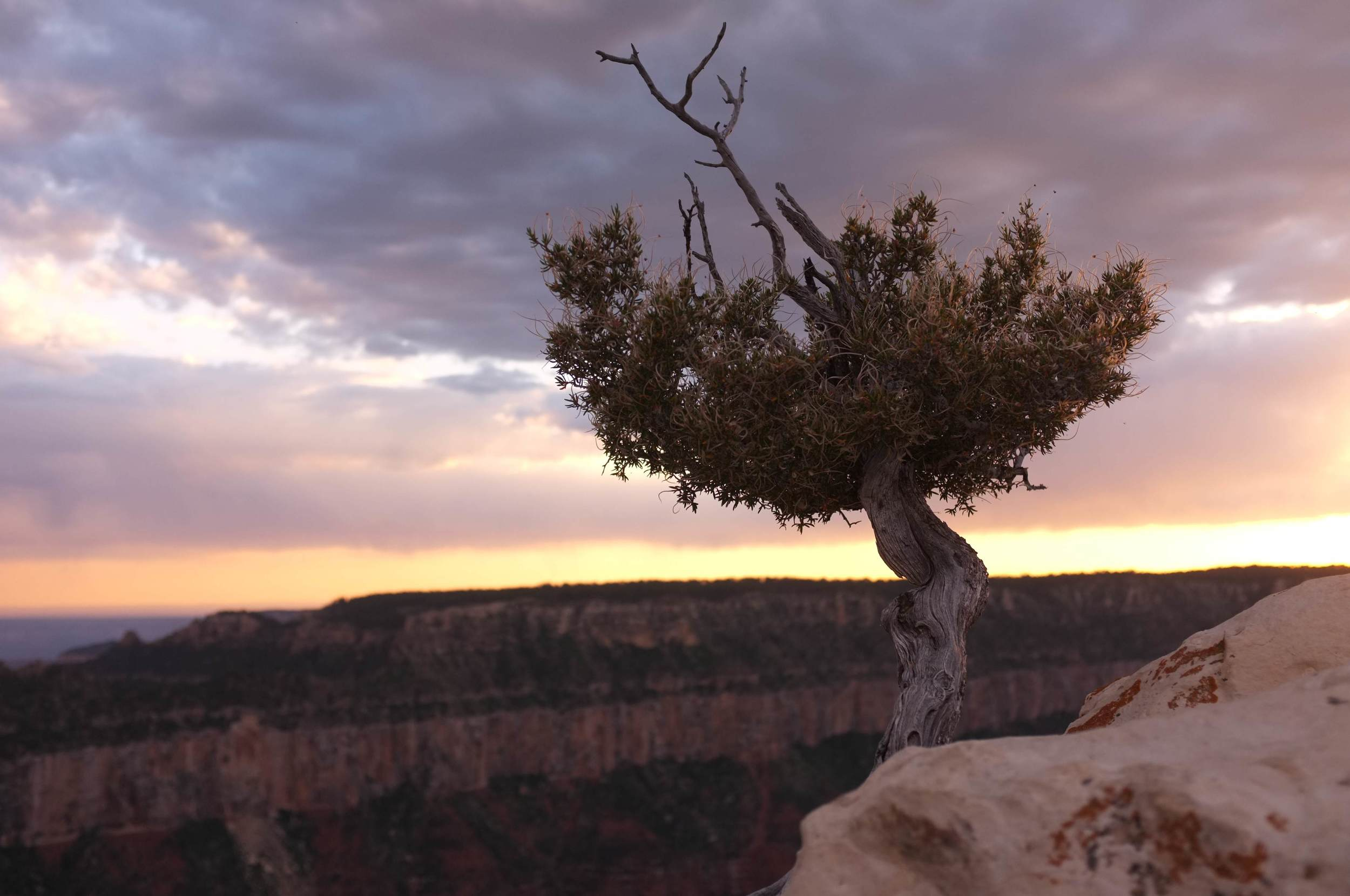 tree_Bryce_Canyon.jpg