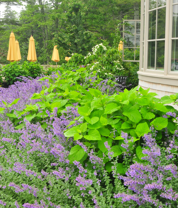 image: www.mainegardens.org