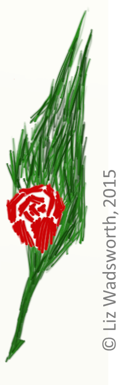 Concept 5 - The Bristly Rose