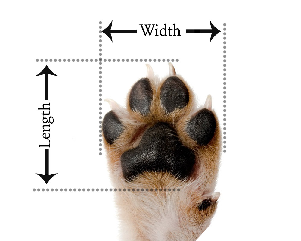 Note: Measure to the paw's nails for the length.
