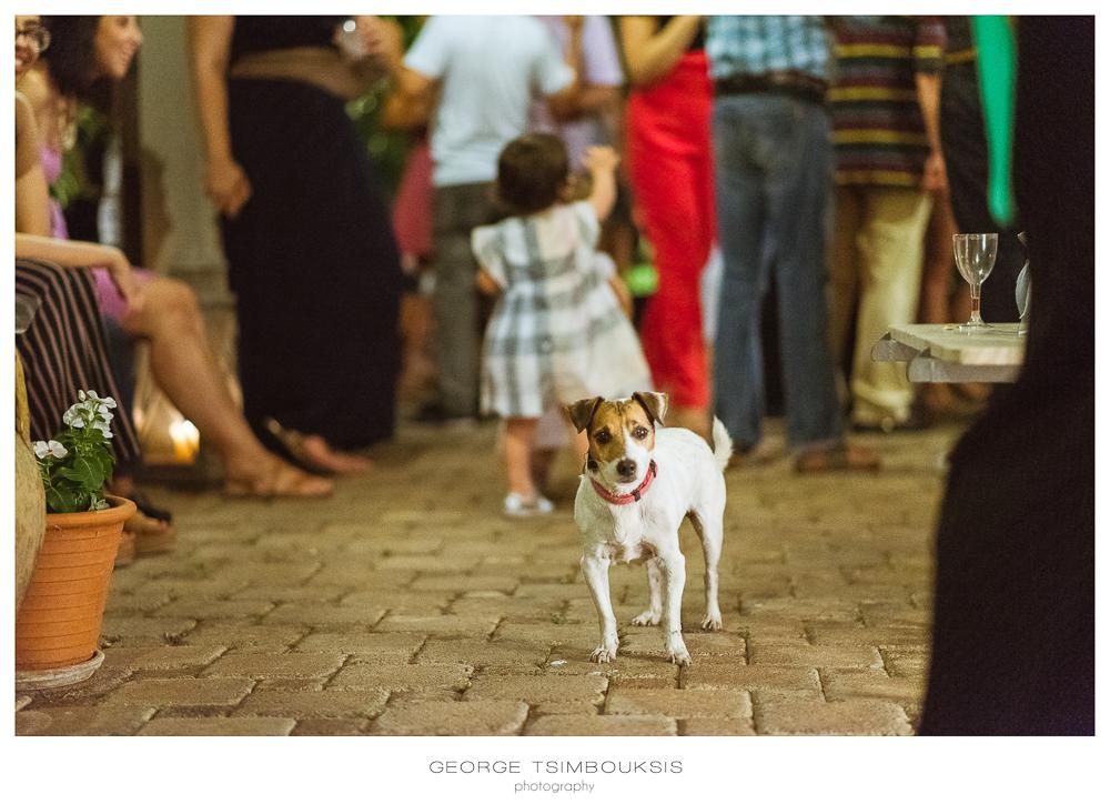 6_Wedding in Mystras_Prewedding Party dog looking.jpg