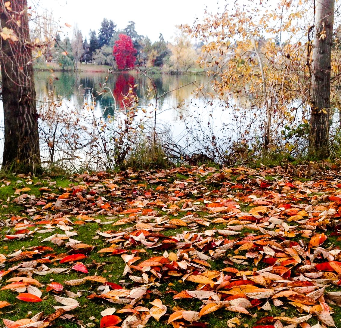 fall leaves.jpg