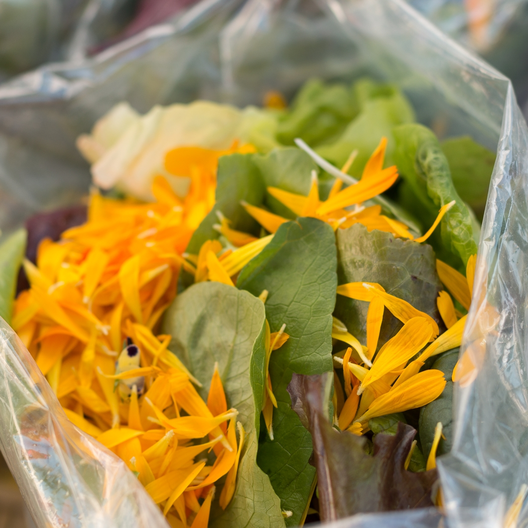 lettuce and petals.jpg