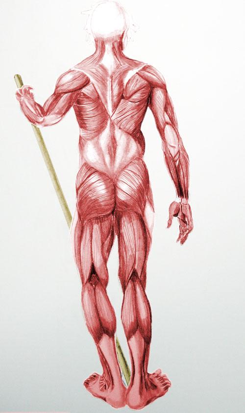 male-muscle.jpg