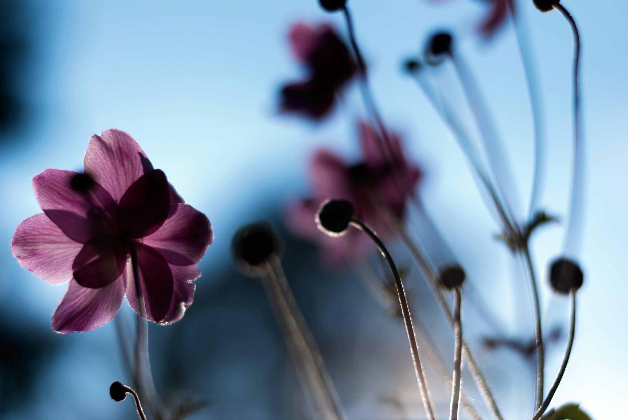 bloom-blooming-blossom-1336454.jpg