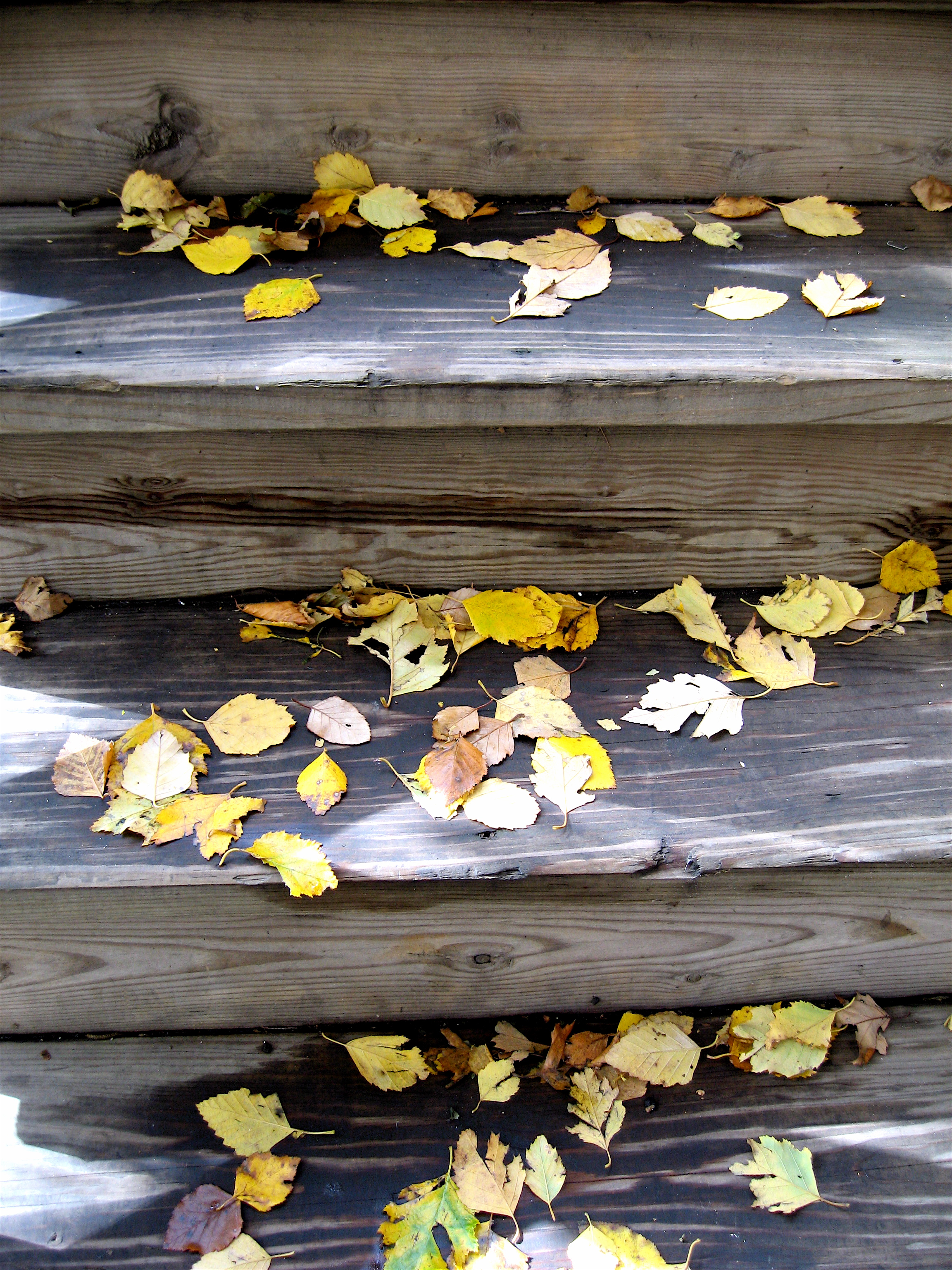 Leaves on the stairs  (1), Chicago, October 2009