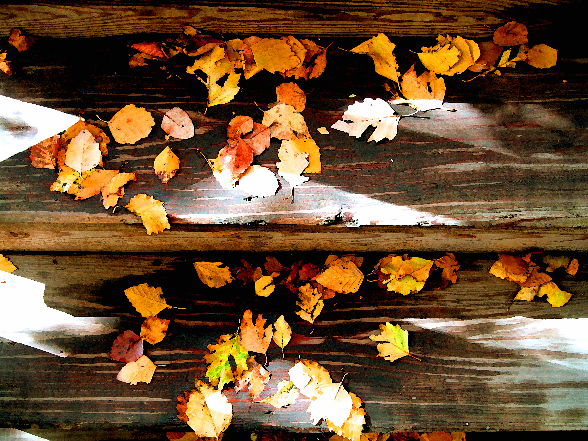 Leaves on the stairs  (2), Chicago, October 2009