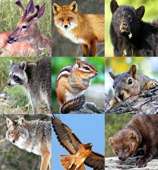 grid-of-wildlife.jpg