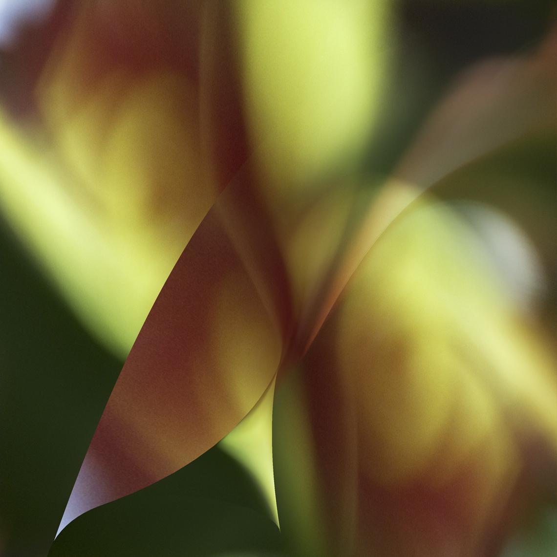 05-Maui-9.jpg
