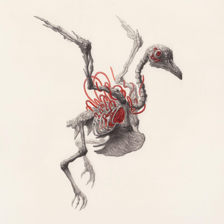 Bird-Skeleton.jpg